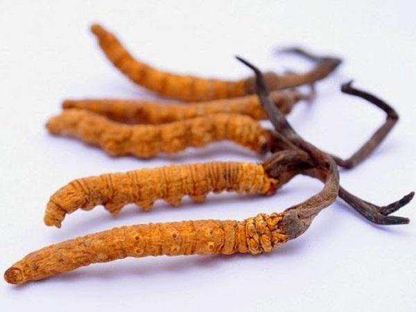 đông trùng hạ thảo giá bao nhiêu 1kg tại việt nam
