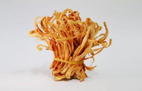 đông trùng hạ thảo của Hàn Quốc